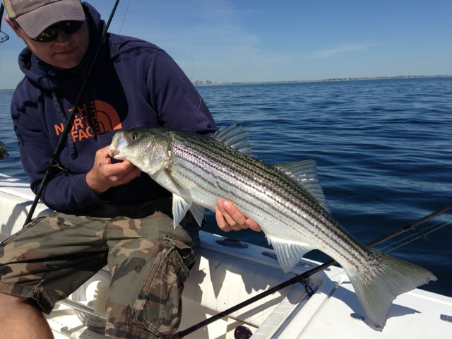 Boston fly fishing and report boston harbor for Boston harbor fishing report