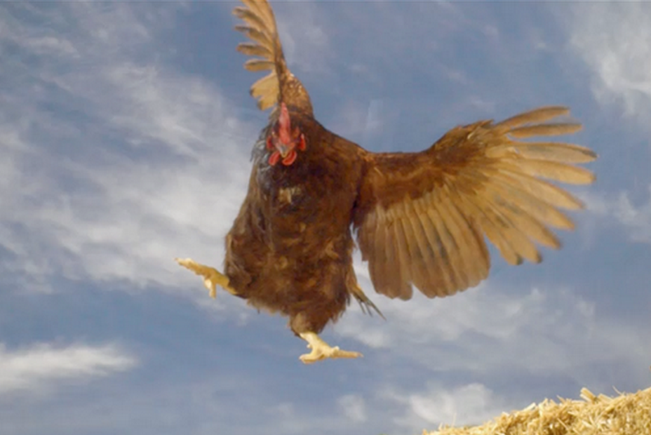 flying-chicken.png