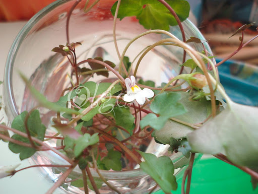 maceta gato - flower pot cat