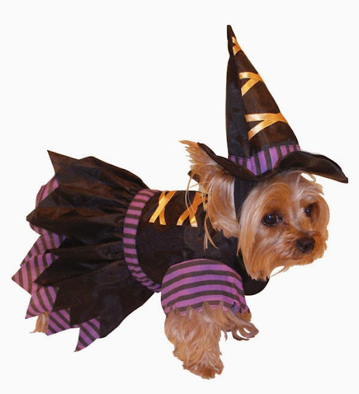 Witch Dog Costume Best Halloween Pet Costumes