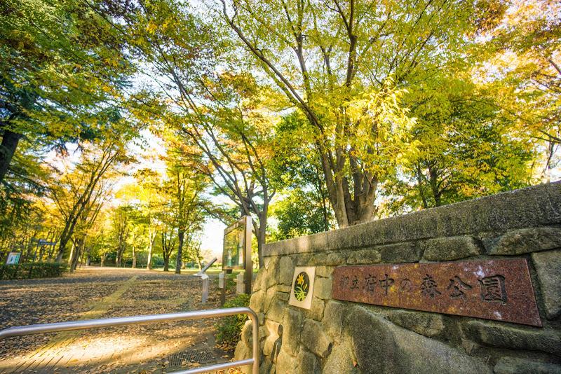 府中の森公園 紅葉 写真1