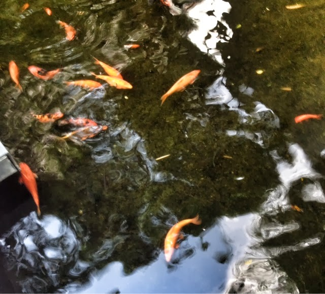 Koi pond at Greenbelt Mall Makati