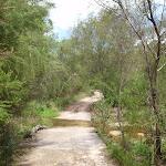Continuing through the bush (121300)