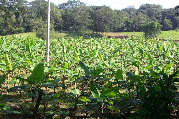 El volcan Mombacho dans Ballades en Nicaragua