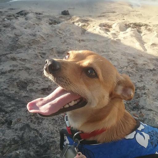 bluedog6 lim review
