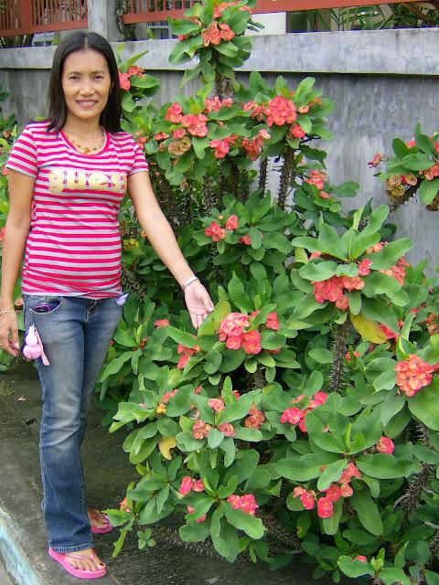 Philippines plants for Philippine garden plants