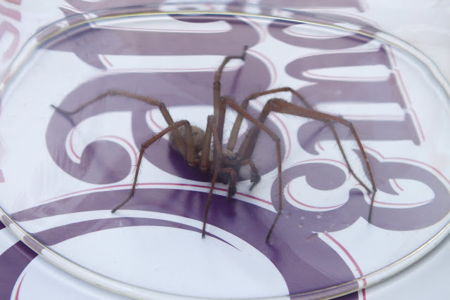 Spider Captured and Released
