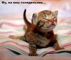 Мелочи кошачьей жизни…