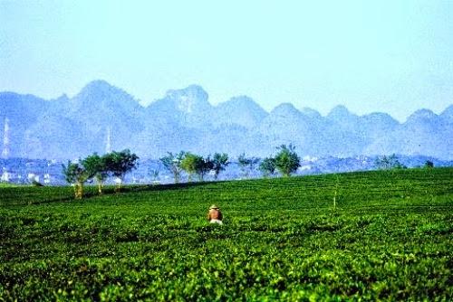 du lich nong nghiep moc chau 7 Du lịch nông nghiệp Mộc Châu, một trải nghiệm mới lạ đầy thú vị