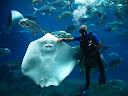 At the aquarium in Durban, we saw this awesome show with a scuba diver feeding the manta rays and other fish. This thing is bigger than him!