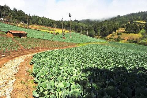 Cultivos en San Ignacio