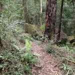 Arrow on tree marking track (73248)