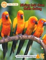 Những Loài Chim Thiên Đường