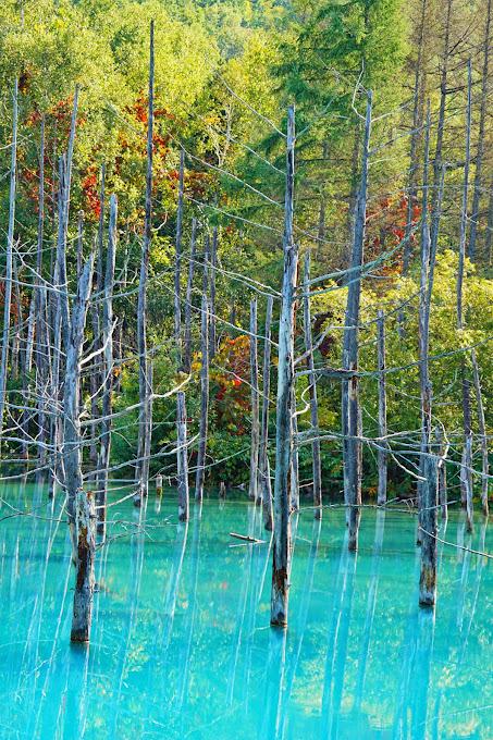 美瑛 青い池 写真6