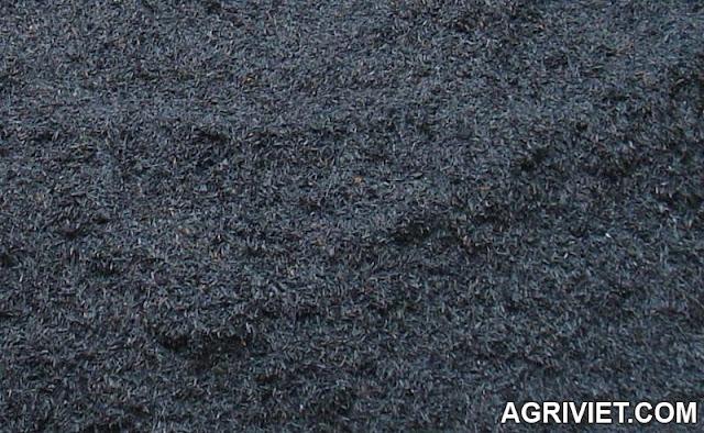 Agriviet.Com-Tr%25E1%25BA%25A5u_%25C4%2591%25C3%25A3_hun.JPG