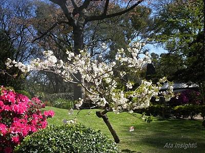 paisajes florales