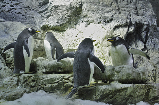 osaka aquarium, penguins face off, penguins sunbathing, top attractions in osaka japan
