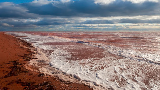The Red Sea, Near Cavendish. Prince Edward Island.jpg