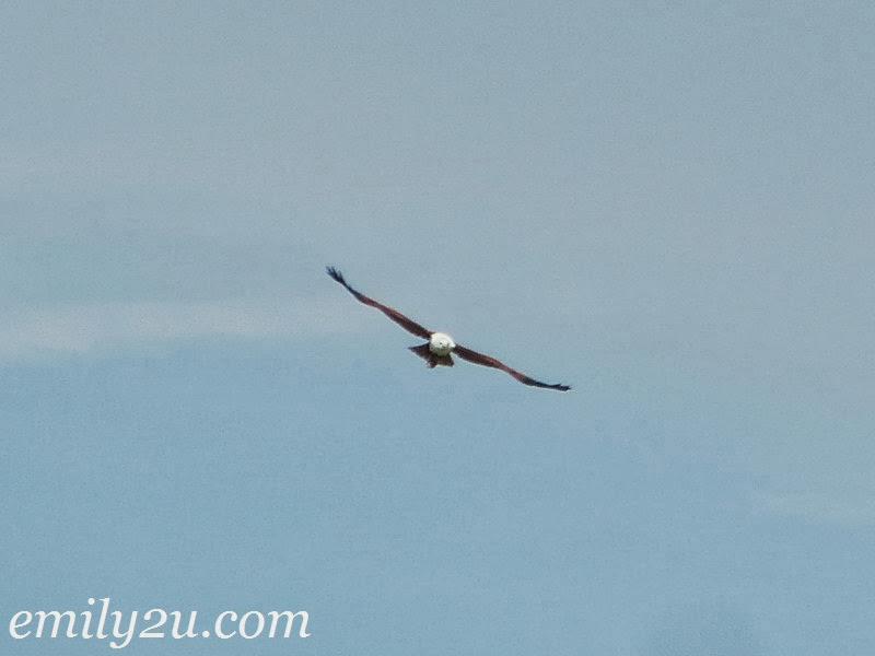 Kuala Gula Bird Sanctuary