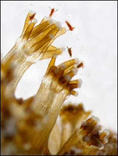 alimentación corales