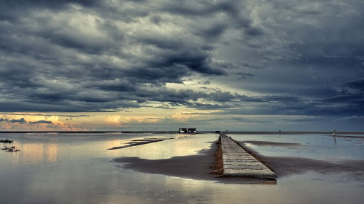 Eucalyptus Beach, Delta del Ebro Natural Park, Spain.jpg