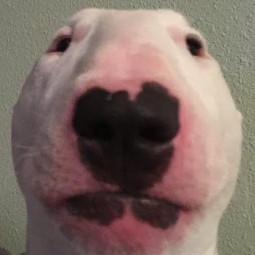 Dogggo
