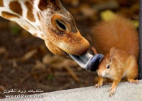 اغرب صور الحيوانات