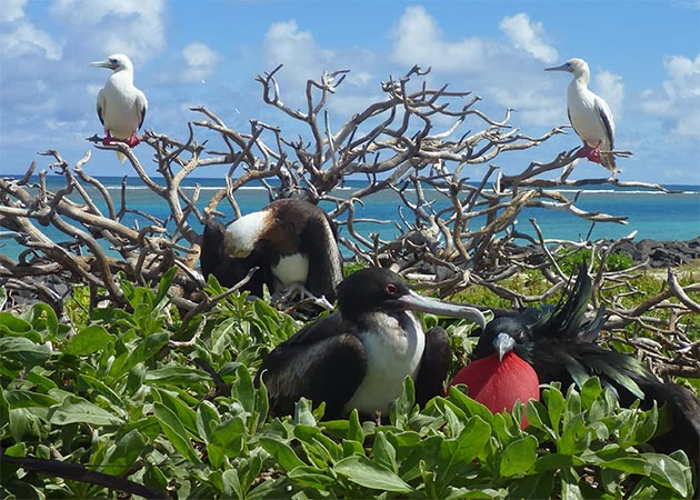 Bird colony on Genovesa Island.