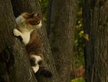 photo, cat, фото, кошка,