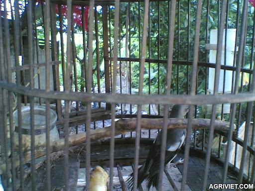 Agriviet.Com-15102011%2528006%2529.jpg