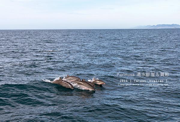 【走走花蓮】福爾摩沙之旅│多羅滿賞鯨