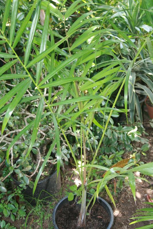 Futur jardin d'orchidées!!! - Page 2 IMG_3691