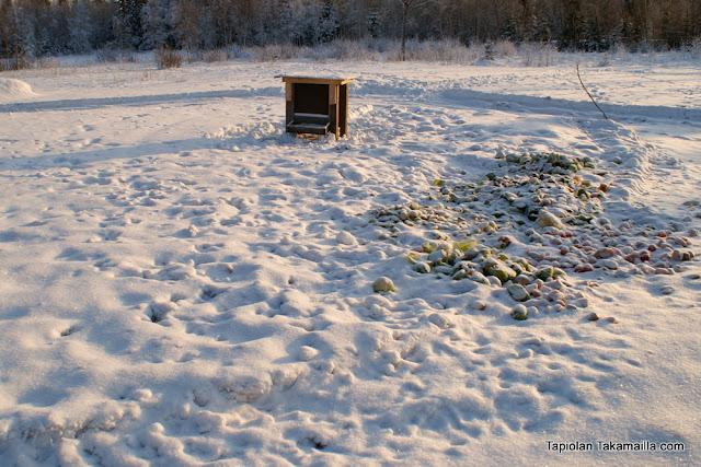 riistakamera riistakameratesti riistakameravertailu riistaruokinta talviruokinta ruokinta-automaatti rehukaali talvimaisema riistanhoito