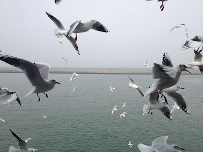 Seagulls circling past