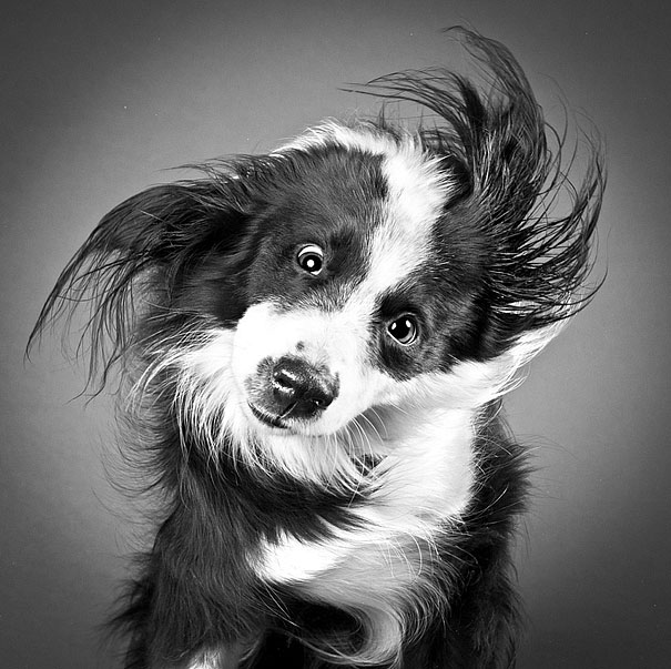 кучета снимани в странни пози и смешни физиономии