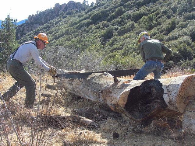 sawing a log to allow the trail through