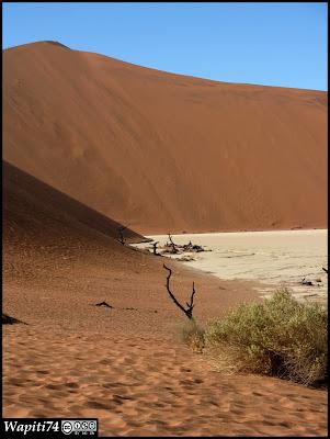 Balade australe... 11 jours en Namibie - Page 2 IMG_0787