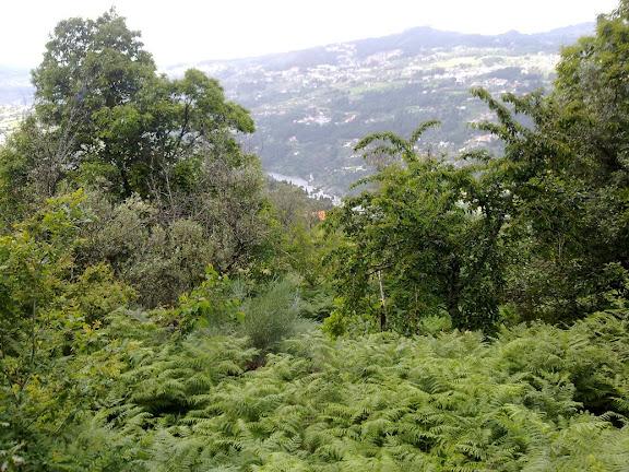 Douro - ELISIO WEEK END, COMARRISCOS, S.PEDRO DE MOEL, DOURO 100620122930
