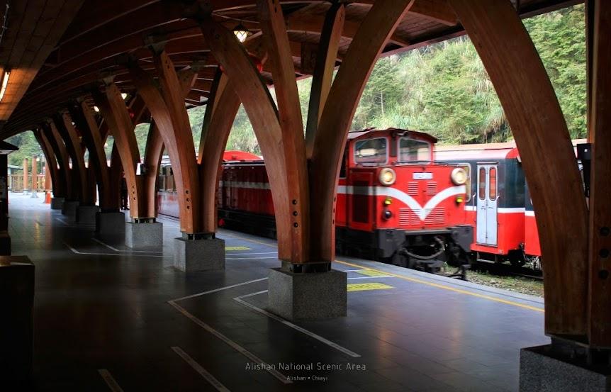 嘉義阿里山景點,巨木群棧道