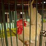 ozdobny ptak w drogocennej klatce