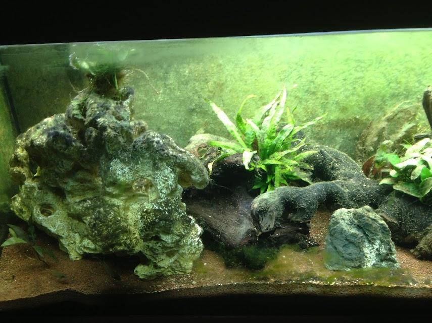 Ma petit histoire Aquariophile de 2009 à aujourd'hui  Iphone+077