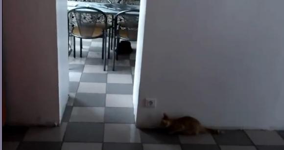【動画】猫「(ぬっふっふw いきなり出て脅かしてやるニャ) バァ!・・・あれれ?」