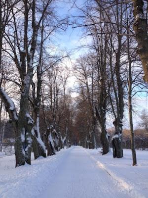 Vintrig allé vid Ulriksdals Slott där jag vände idag