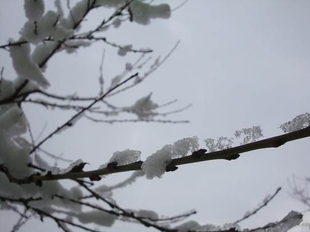 картинки про льдинки