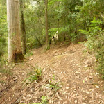 Track through forest in the Watagans (322586)