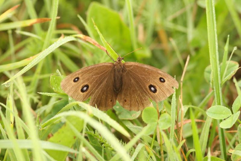 fluturi insecte wildlife