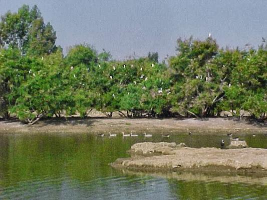 Cañada de los Pájaros, Carretera de la Puebla del Río - Isla Mayor, km 8, 41130 La Puebla del Río, Sevilla, Sevilla, Spain