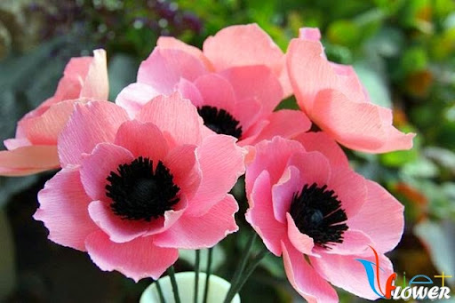 hoa anh túc màu hồng từ giấy nhún