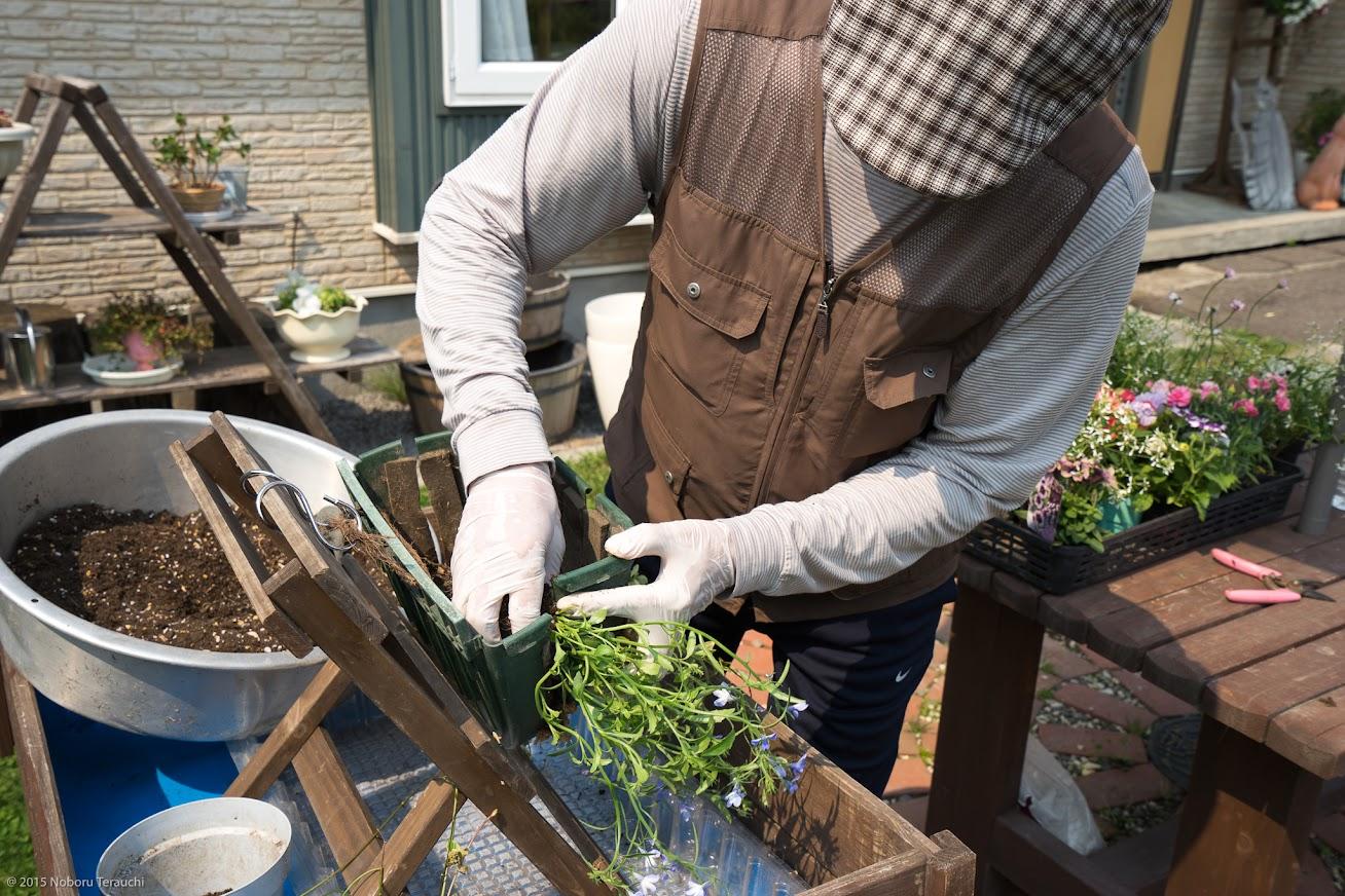 7.苗の根や茎をビニールシートで保護しながら、慎重にバスケットの切り込みに差し込んでいく