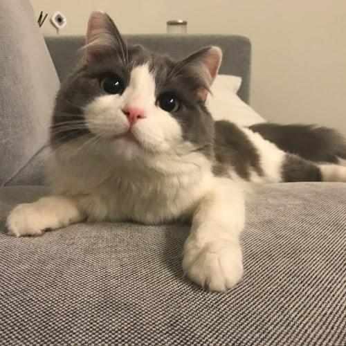 Lyn Profile Photo
